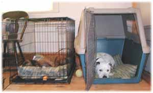 dogs napping in crates