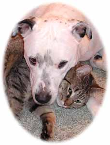 pit bull and cat snuggling